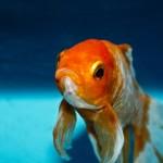 il-pesce-volante